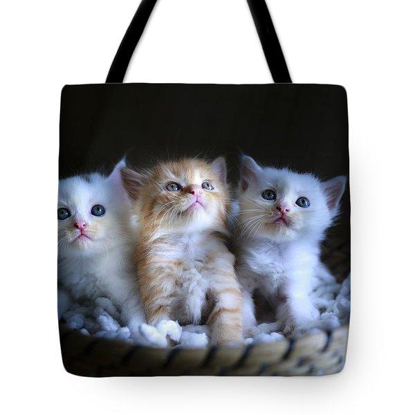 Three Little Kitties Tote Bag