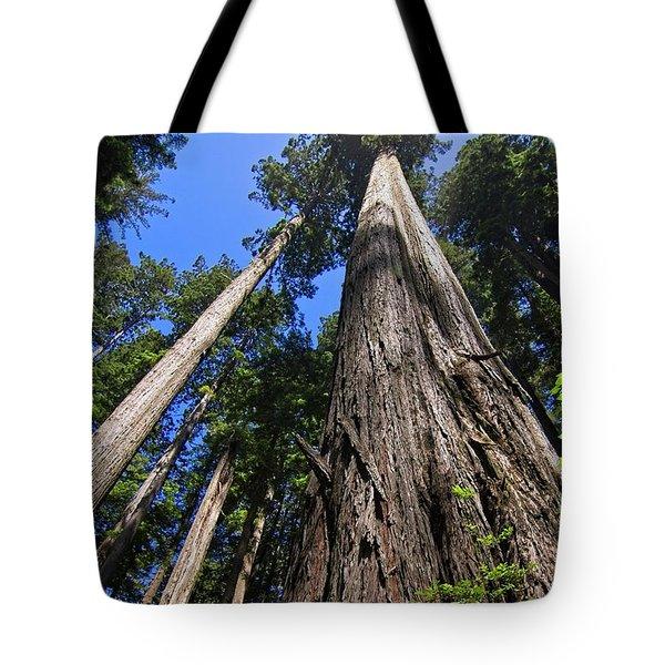 Towering Redwoods Tote Bag
