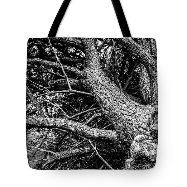 Trees, Leaning Tote Bag