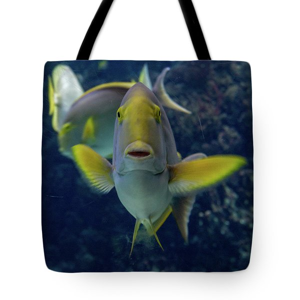 Tote Bag featuring the photograph Tropical Fish Poses. by Anjo Ten Kate