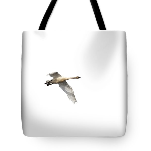 Trumpeter Swan Isolated 2018-1 Tote Bag