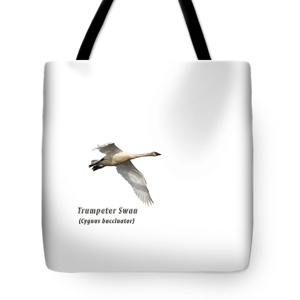 Trumpeter Swan Isolated 2018-2 Tote Bag