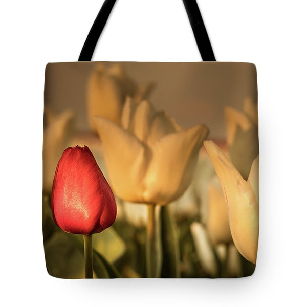 Tote Bag featuring the photograph Tulip Field by Anjo ten Kate