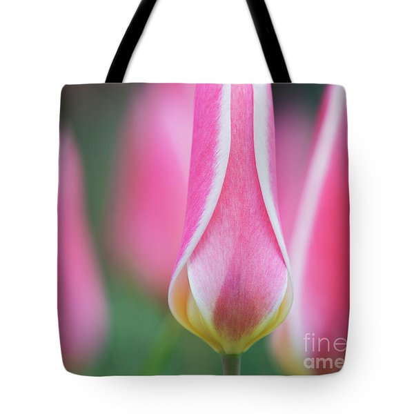 Tote Bag featuring the photograph Tulip Lady Jane Flowers by Tim Gainey
