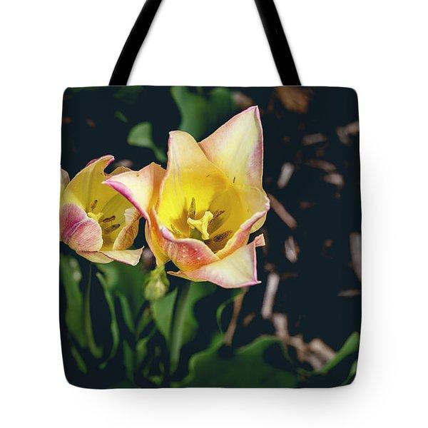 Tulips At Hershey Gardens Tote Bag
