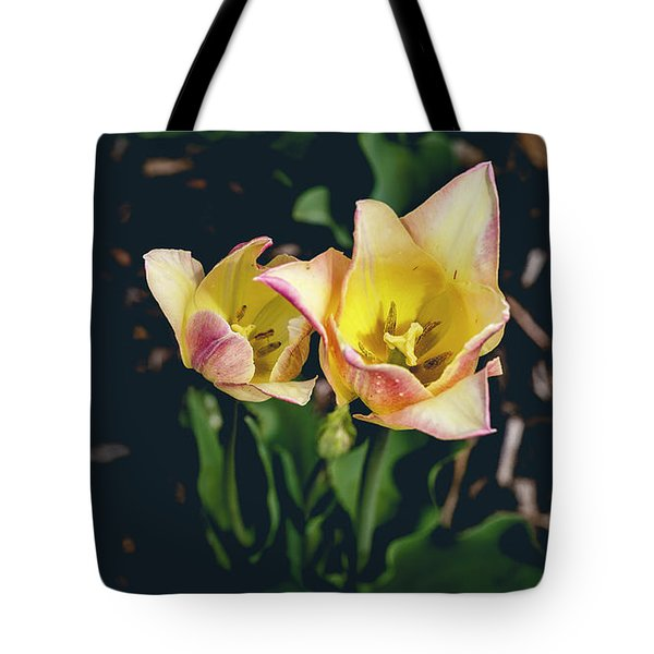 Tulips At Hershey Gardens Tote Bag