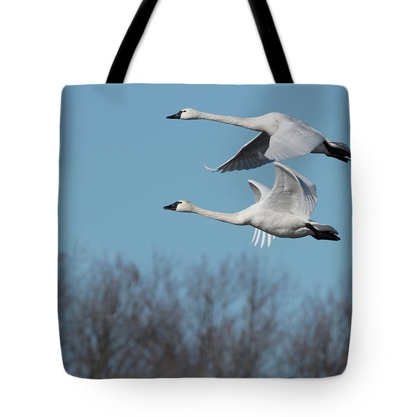 Tundra Swan Duo Tote Bag