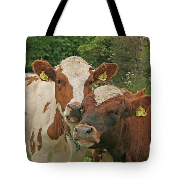 Tote Bag featuring the photograph Two Cows by PJ Boylan