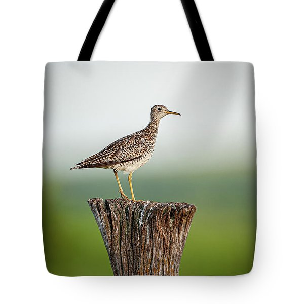 Tote Bag featuring the photograph Upland Sandpiper On Fence Post by Jeff Phillippi