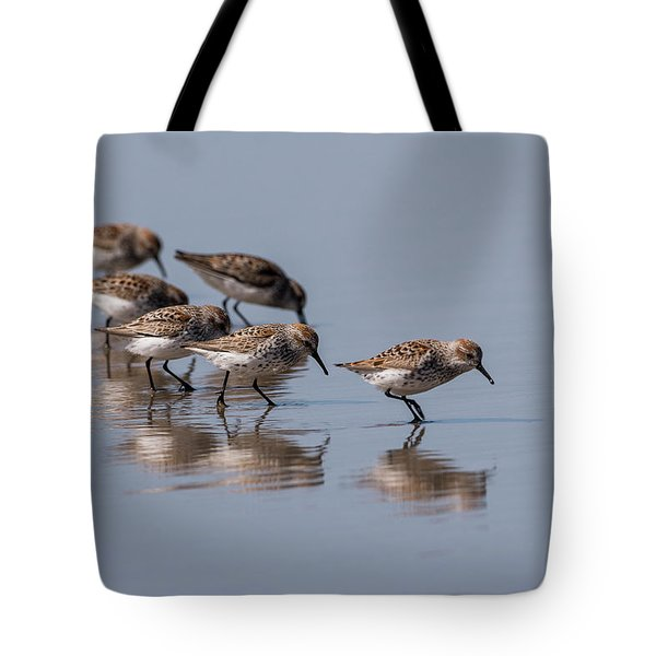 Western Sandpipers And Reflection Tote Bag