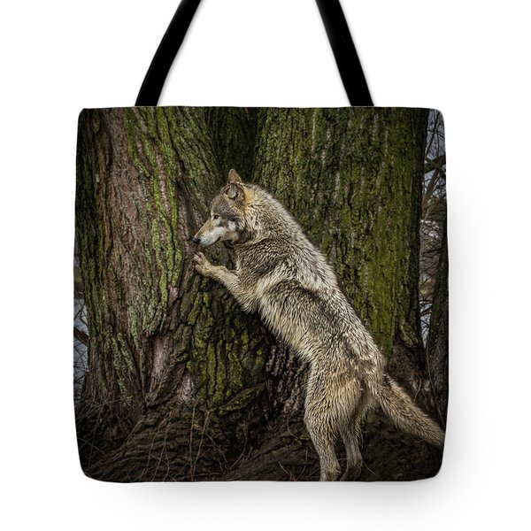 What's In There Tote Bag