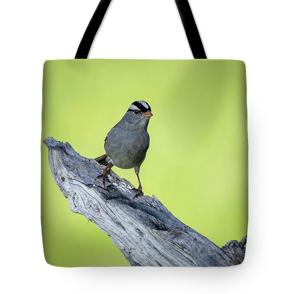 White Crowned Sparrow 1 Tote Bag