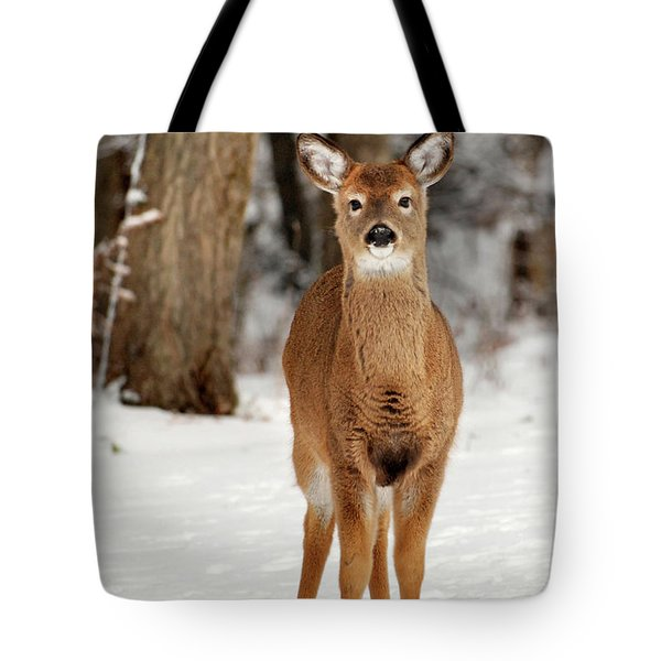 Whitetail In Snow Tote Bag