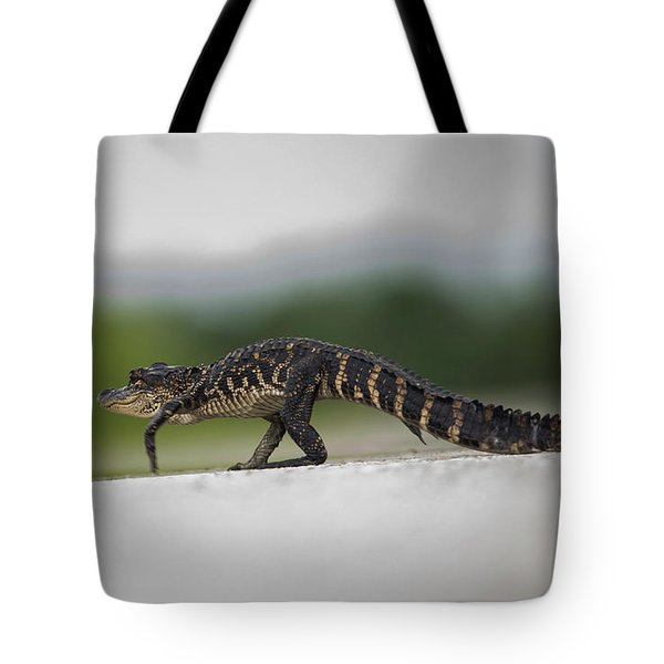 Why Did The Gator Cross The Road? Tote Bag