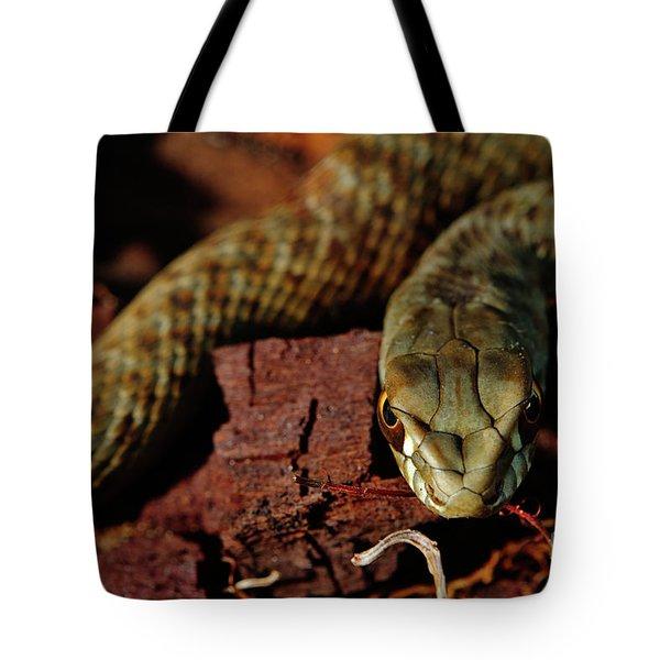 Wild Snake Malpolon Monspessulanus In A Tree Trunk Tote Bag