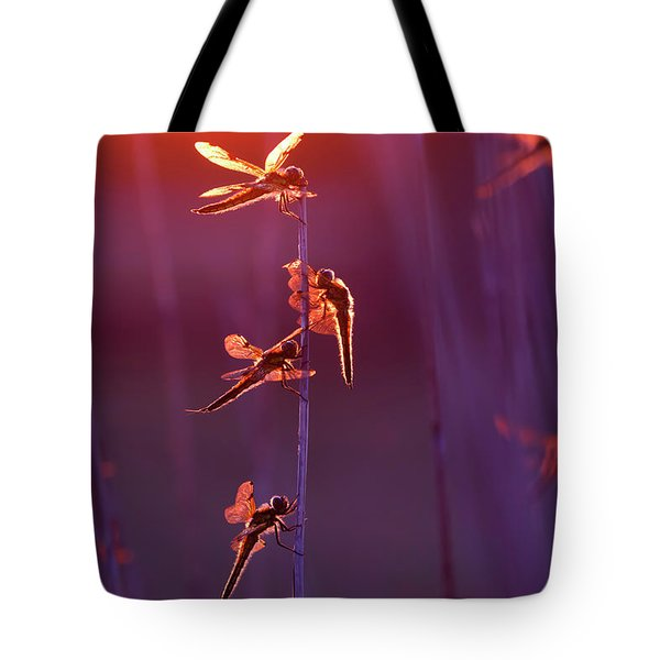 Winged Wonders - Dragonflies At Sunset Tote Bag