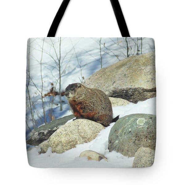 Winter Groundhog Tote Bag