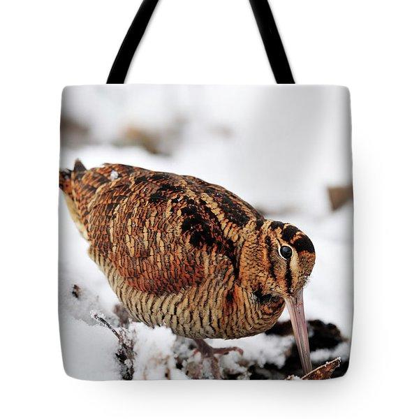 Woodcock Probing For Prey In Marsh, Berwickshire, Scotland Tote Bag
