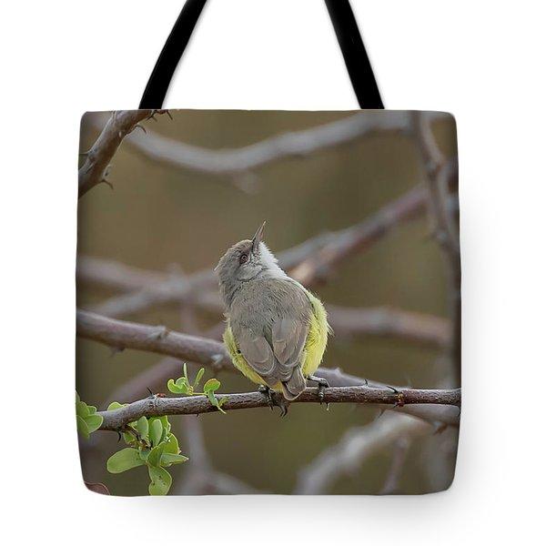 Yellow-bellied Eremomela Tote Bag