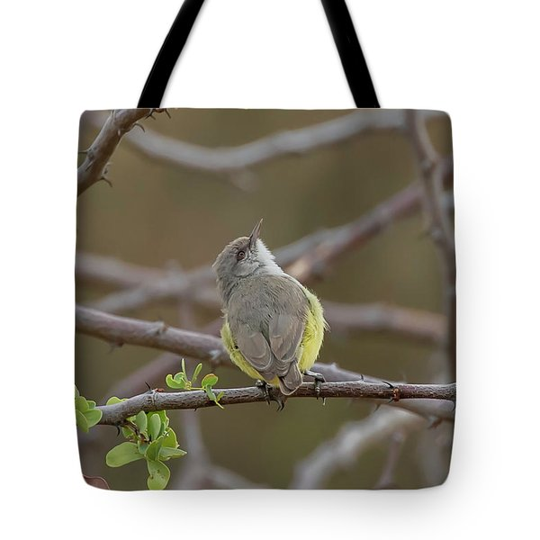 Tote Bag featuring the photograph Yellow-bellied Eremomela by Thomas Kallmeyer