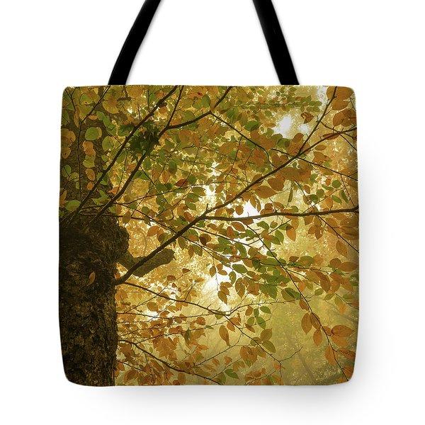 Yellow Fall Leaves - Blue Ridge Parkway Tote Bag
