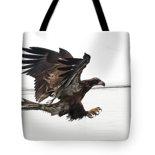 Young Bald Eagle Tote Bag