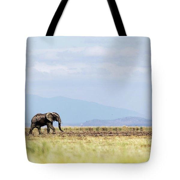 Young Elephant Walking Alone In Amboseli Kenya Tote Bag