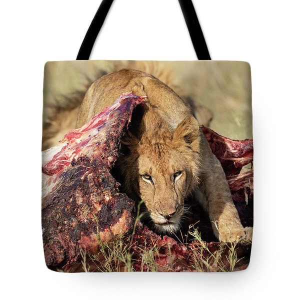 Tote Bag featuring the photograph Young Lion On Cape Buffalo Kill by Thomas Kallmeyer