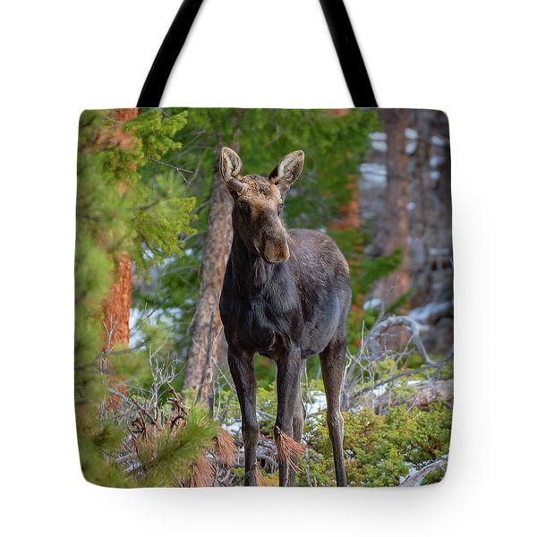 Young Moose In The Morning Forest Tote Bag