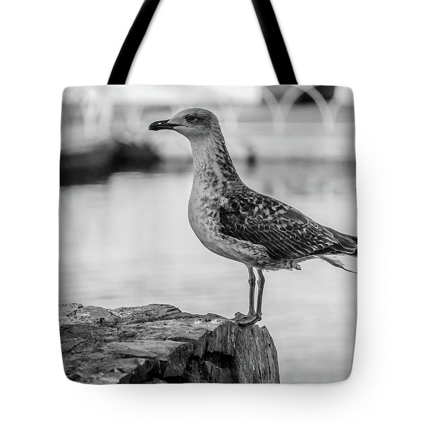Young Seagull Tote Bag