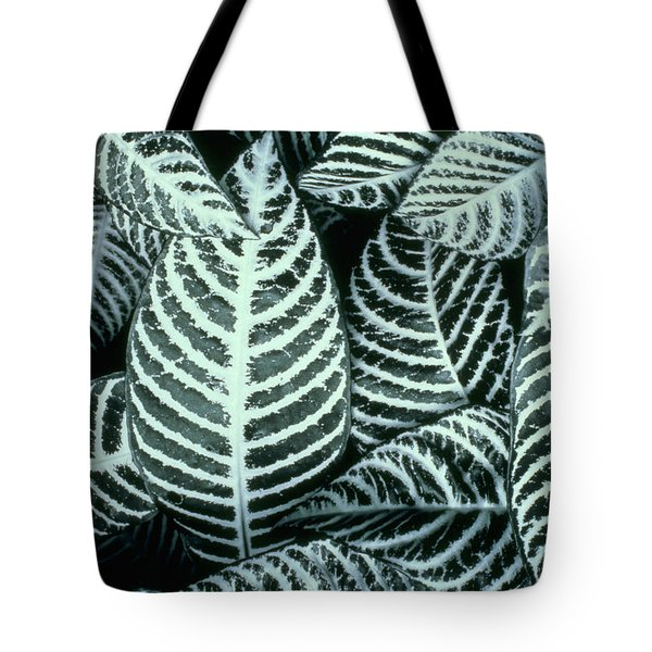 Zebra Leaves Tote Bag