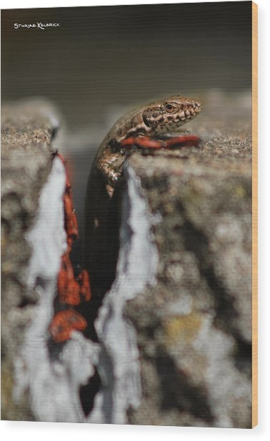 Wood Print featuring the photograph  A Lizard Emerging From Its Hole by Stwayne Keubrick