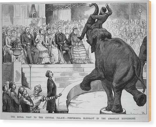 A Performing Elephant  Entertains Wood Print by Mary Evans Picture Library