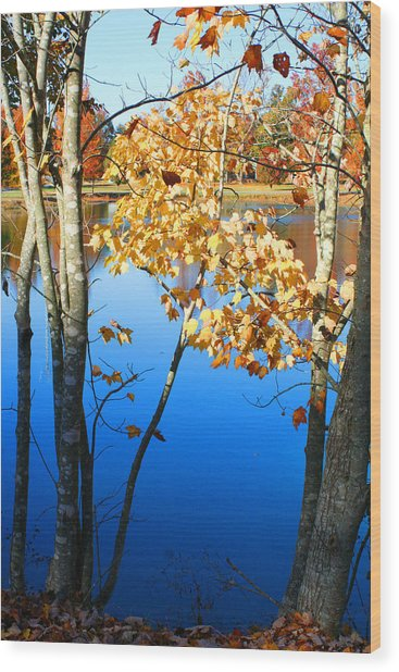 Autumn Trees On The Lake Wood Print