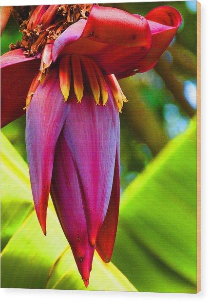 Banana Flower Glow Wood Print by Margaret Saheed