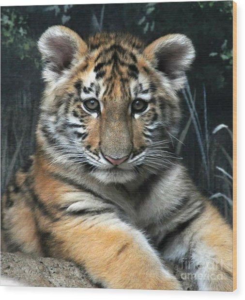 Bengal Tiger Cub Im The Baby Wood Print