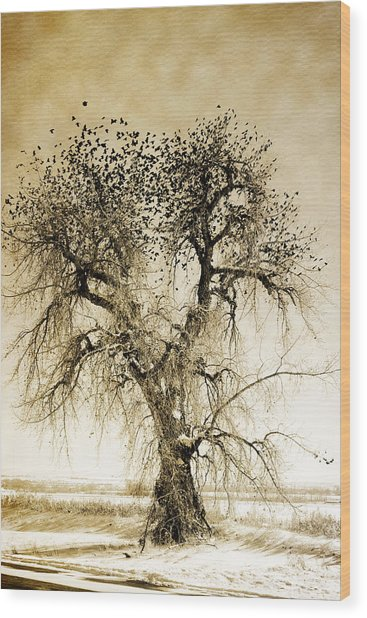 Bird Tree Fine Art  Mono Tone And Textured Wood Print