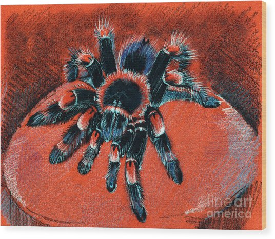 Brachypelma Smithi Redknee Tarantula  Wood Print