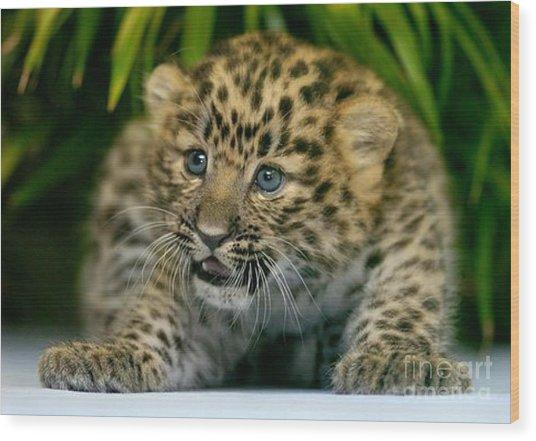 Cheetah Cub Im Gonna Getcha Wood Print