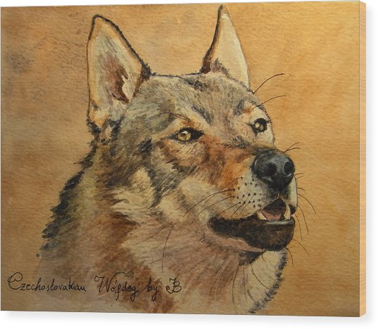 Czechoslovakian Wolfdog Portrait Wood Print