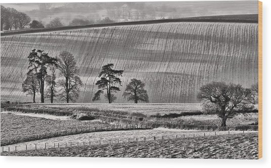 Fields And Trees Wood Print