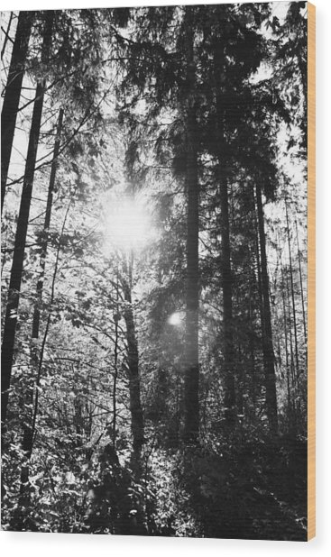 Forest Wood Print by Falko Follert