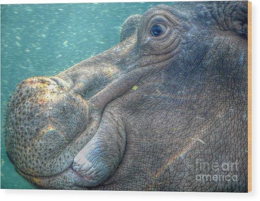 Hippopotamus Smiling Underwater  Wood Print