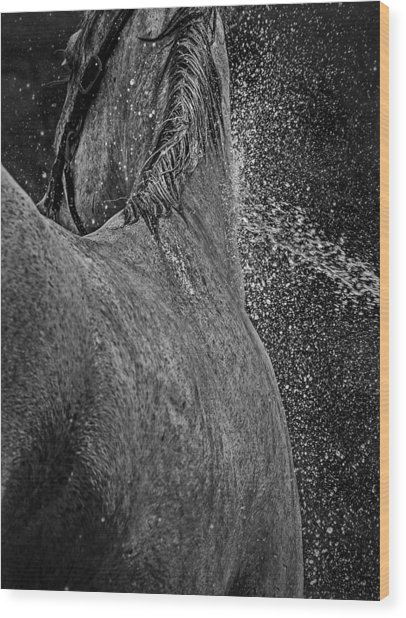 Horse Cool Off Wood Print