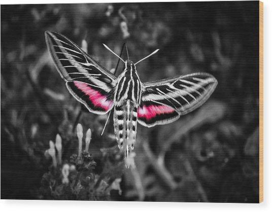 Hummingbird Moth Bw Print Wood Print