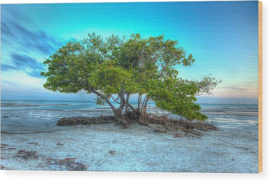 Key West Solitary Existence Wood Print