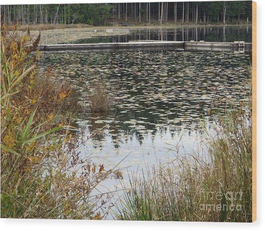 Lily Pads On Whonnock Lake Wood Print