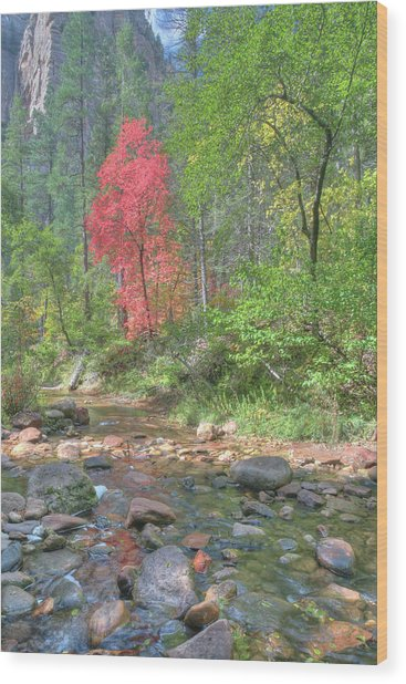 Lone Maple Fall Creek Wood Print