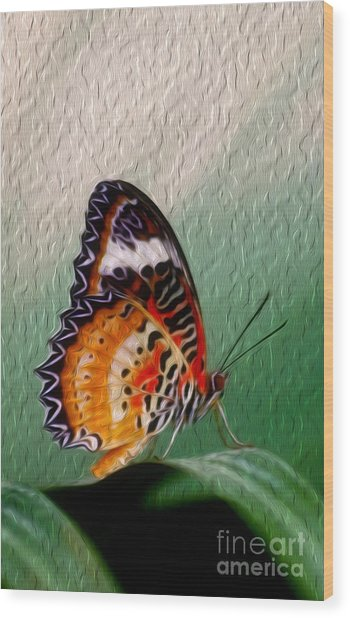 Malay Lacewing Butterfly II Wood Print