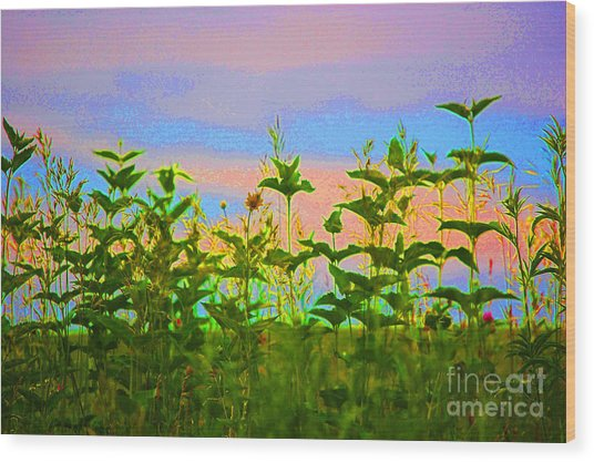 Meadow Magic Wood Print